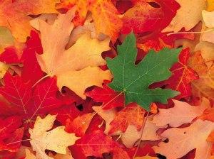 Routine d'automne - Feuilles aux couleurs d'automne